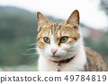 Portrait Cute cat sitting in front of the house Is 49784819