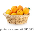 Fresh apricots in the basket are isolated on a 49785803