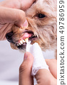 Vet cleaning pet dog teeth coated with plaque with 49786959