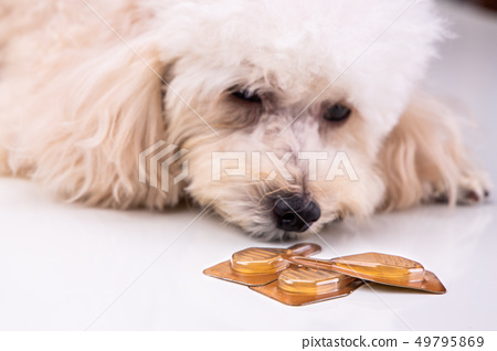 Essential oil spot-on drips with dog to as 49795869