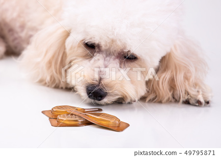 Essential oil spot-on drips with dog to as 49795871