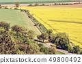 Flowering rapeseed field in spring time 49800492