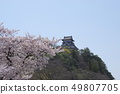 Inuyama castle and cherry blossoms 49807705