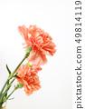 美丽的春天的花朵,生活珊瑚色康乃馨,槲寄生,玫瑰 49814119