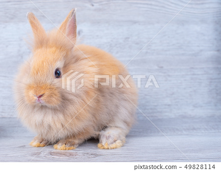 One of light brown bunny rabbit stay on wood table 49828114