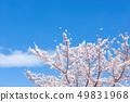 Sakura and sky 49831968