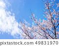 Cherry Blossom. 49831970