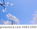 Sakura and sky 49831990