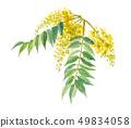 망둥이 나무 검양 옻나무 49834058