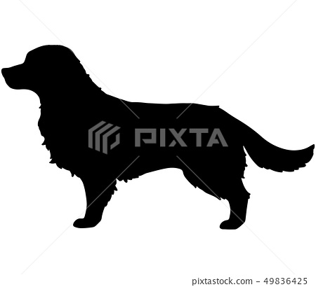 Golden Retriever Silhouette Stock Illustration 49836425 Pixta The golden retriever is a medium sized dog which was historically used to retrieve animals for golden retrievers have a dense inner coat providing them with warmth and a way to repel water off. https www pixtastock com illustration 49836425