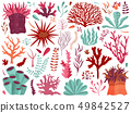 Underwater Coral Reef with Seaweeds and Anemones 49842527