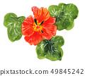 flower, flowers, herb 49845242
