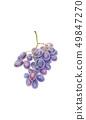 Dark blue grapes dry bunch 49847270