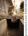 배수구 위에 고양이 49850656