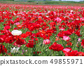 Vast poppy field 49855971