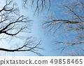 Winter trees 49858465
