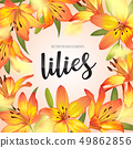 Blooming beautiful yellow lily flowers background  49862856