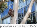 Kolala Bears Observe Construction 49863577