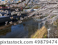 도쿄 메구로 강의 벚꽃 49879474