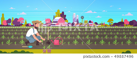 male farmer planting young seedlings plants vegetables man working in garden agricultural worker eco 49887496