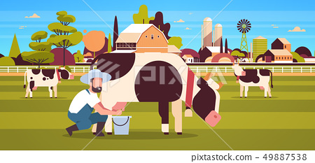 male farmer milking cow in bucket farm domestic animal cattle fresh milk concept flat horizontal 49887538