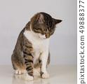 cat spleeping 49888377