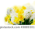 Hyacinth fresh flowers 49889301