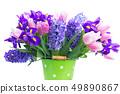 hyacinths and tulips 49890867