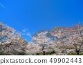 舎人公園의 벚꽃 풍경 49902443