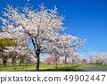 舎人公園의 벚꽃 풍경 49902447