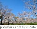 舎人公園의 벚꽃 풍경 49902462