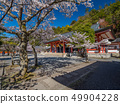Kurama-ji Temple where the main shrine cherry blossoms are in full bloom 49904228