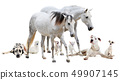 group of white pet 49907145