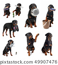 rottweiler and objects 49907476