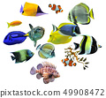 group of fishes 49908472