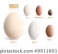Colored Realistic Eggs Icon Set 49911601