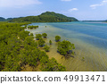 이리 오모테 섬의 풍경 49913471