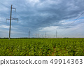 Field of Green Sunflowers and Power Lines 49914363