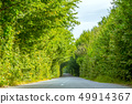 Empty Rural Road and Green Tree Tunnel 49914367