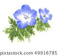 flower, flowers, nemophila 49916785