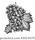 Set of grapes monochrome sketch. Hand drawn grape bunches. Hand drawn engraving style illustrations. 49924079