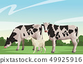 cow and goat 49925916