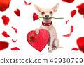 valentines dog 49930799