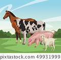 horse cow pig and goat 49931999