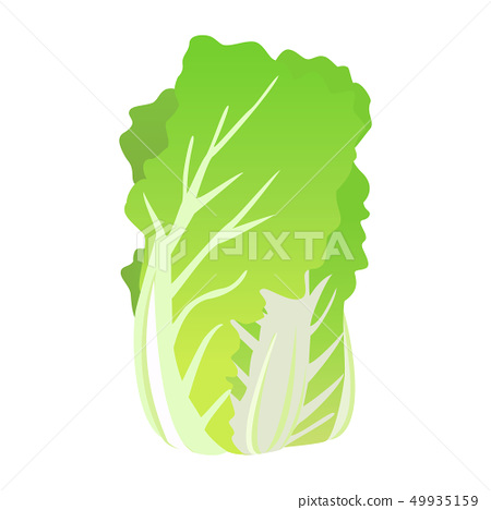 Chinese cabbage 49935159