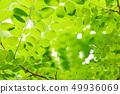 新鮮的綠色 49936069