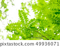 新鮮的綠色 49936071