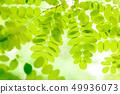 新鮮的綠色 49936073