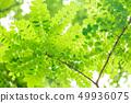 新鮮的綠色 49936075