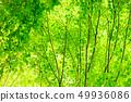 新鮮的綠色 49936086